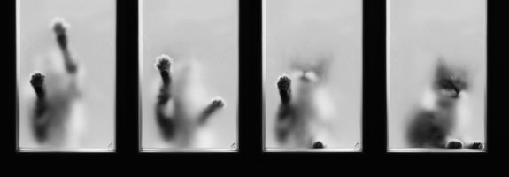 Pleeeease... let me in