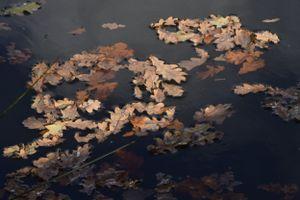 0063 - Leaves