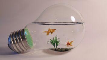 FishBulb