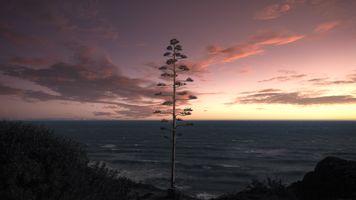 Tree-5064341