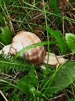Snail in my garden