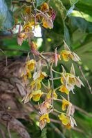 Bumbling Orchids 1