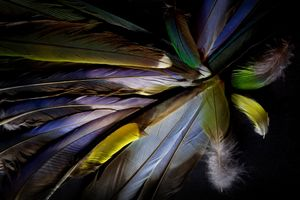Still life with colourful feathers