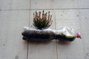 Upcycling of a plastic bottle from soft drink close up. It is used as flowerpot for plants. The bottle with pink cap is fixed with string on a vertical concrete wall. Cutout of a vertical garden.