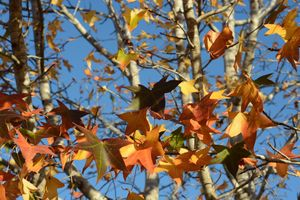 Autumn leaves oh so wondrous