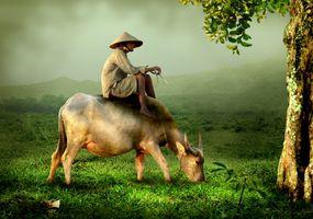 Farmer on cow