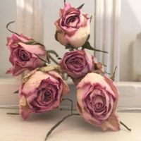 Desiccated Roses
