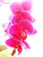 Mini orchid flowers