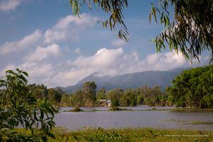 Rice Fields Tra Su Forest