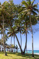 Ocean View in the Dominican Republic
