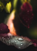 More Raindrops