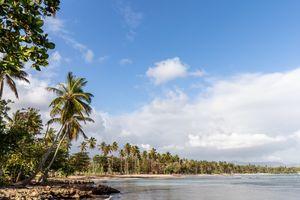 Summer - Sun - Palms - Beach