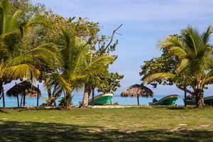 Ocean view between Palms