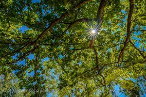 Trees with flare sun burst.