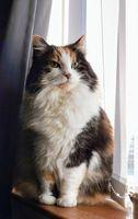 Cookie on the Windowsill