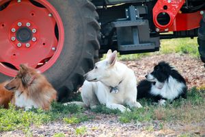 Farmdogs