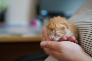 Story Day 10: The kittens open their eyes