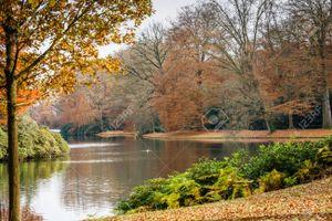 66560558-forêt-d-automne-avec-des-branches-d-arbres-et-des-feuilles-colorées-sur-le-terrain