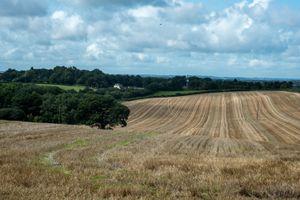 Harvest Tracks in Field