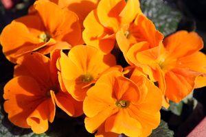 Orange flowers.
