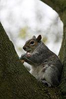 Nuts 3