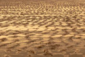 Golden Sand Ripples on a Beach