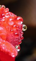 Droplets on Red