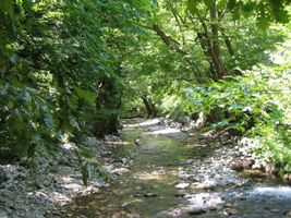 A beautiful natural forest landscape in Greece