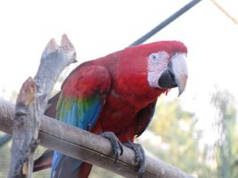 Beautiful parrot enjoying a peaceful day