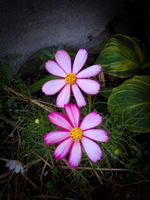Flower and Nature6