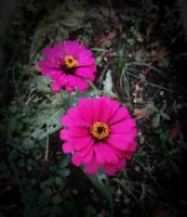 Flower and Nature8