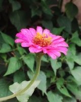Flower and Nature9