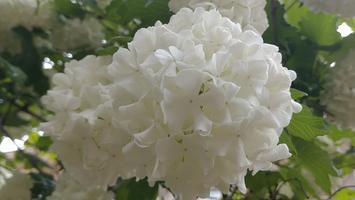 Sphere of White Flowers