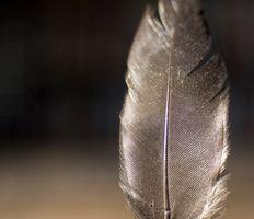 Tiny Feather