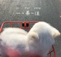 White Cat In Shopping Cart