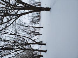 A snowy outlook