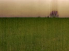 Just a tree in a field. Using ICM technique.