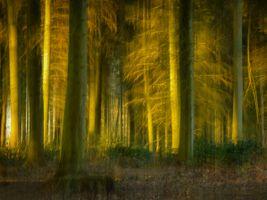 Enchanted forest. Using ICM