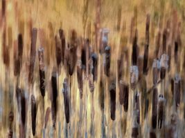 Abstract bulrushes.