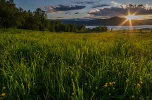 Midnightsun and a flowery field