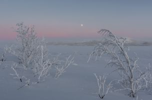 Frosty small trees at the mountain