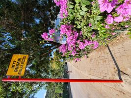 BUS STATION AND BOUGAINVILLEA
