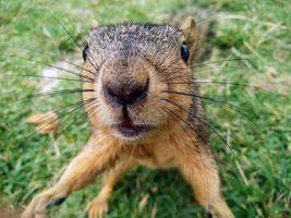 A Squirrel Hug
