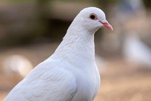 Portrait of a White Bird