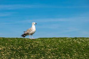 Beautiful Seagull Against a Beautiful Sky