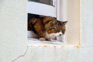 Escape Cat