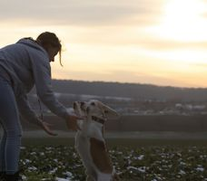Owner playing with his Labrador Retriever
