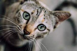 Amazing cat's eyes