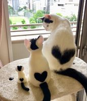 Cute cat's with heart shaped