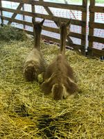 Animals relaxing